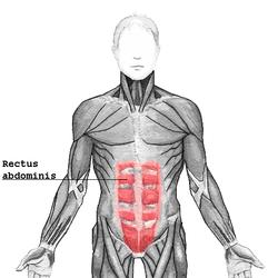 Abdominales en Imágenes Anatómicas